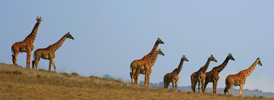 Serenget