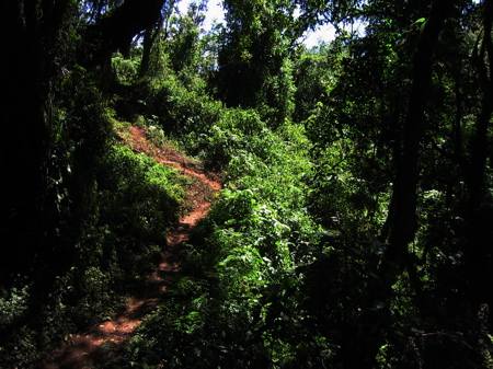 forest-path.jpg