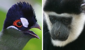 Bird & Animal Life
