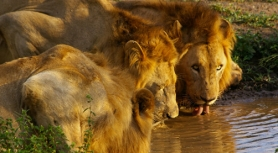 4001-main-image-kruger-lodge-safari