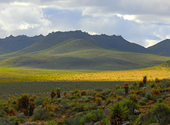 namaqualand1.jpg