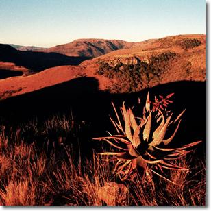 Mpumulanga Landscape